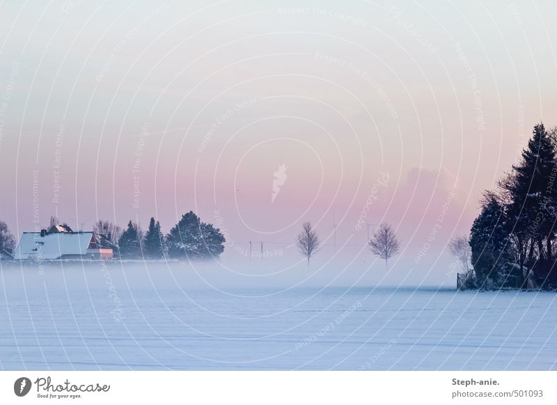 Someday we'll all disappear in the fog. Sky Horizon Winter Fog Snow Tree Field House (Residential Structure) Roof Cold Blue Pink Calm Loneliness