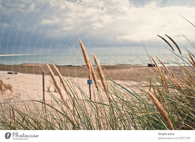 Quiet memories Plant Sand Water Clouds Bad weather Grass Marram grass Coast Beach Bay North Sea Ocean Dark Fresh Calm Borkum East Frisland East frisian island
