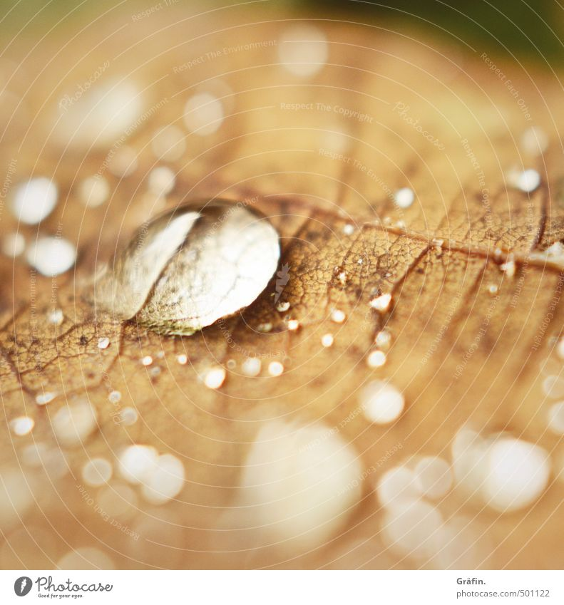 autumn I Nature Water Drops of water Autumn Leaf Glittering Faded To dry up Brown Idyll Ease Pure Environment Environmental protection Colour photo