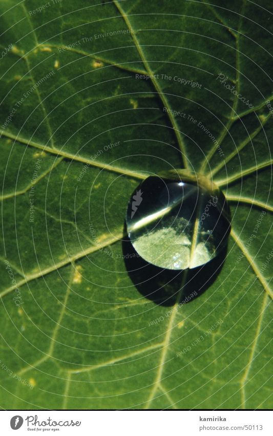 Waterdrop Round Mirror Vessel Leaf Green Plant Sphere Drops of water Reflection Lotus Hydrophobic