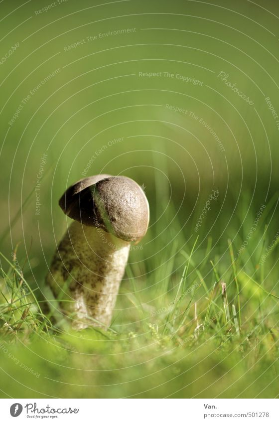 Nature Green Plant Environment Meadow Autumn Grass Brown Growth Mushroom