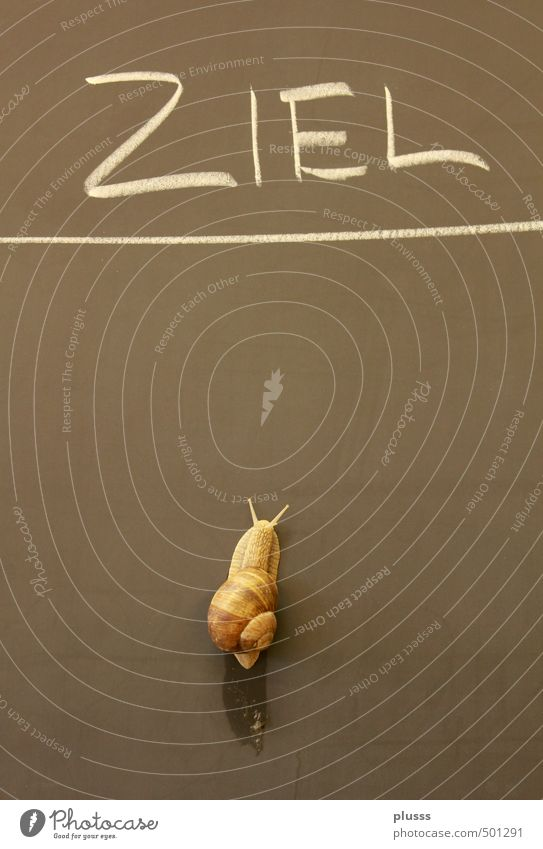 Everyone reaches his or her goal! Snail 1 Animal Athletic Uniqueness Slimy Brown Brave Patient Contentment Resolve Success Advancement Stagnating Target