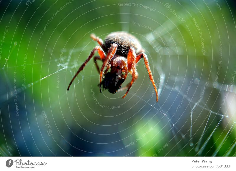 Nature Green Animal Small Eating Brown Contentment Success Authentic Observe Hunting Breakfast Virgin forest Spider