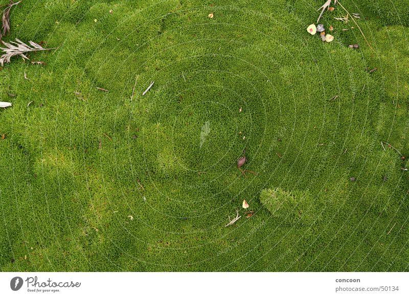 Nature Green Meadow Soft Moss Juicy New Zealand Rotorua
