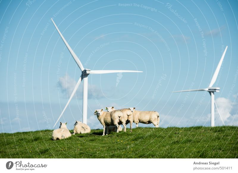 Määh Relaxation Calm Vacation & Travel Freedom Summer vacation Technology Energy industry Renewable energy Wind energy plant Nature Landscape Sky