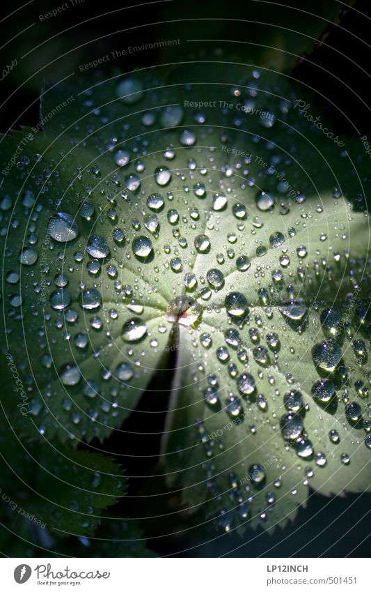 .O:°oÖ:.°. Environment Nature Animal Water Drops of water Plant Leaf Foliage plant Garden Dark Wet Green Dew Flare Shaft of light Point of light Hydrophobic