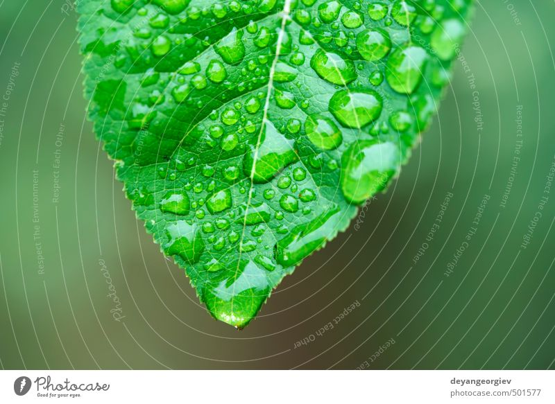 Green leaf and dew Life Summer Garden Environment Nature Plant Rain Grass Leaf Drop Growth Fresh Bright Wet Natural Colour water background Dew close up