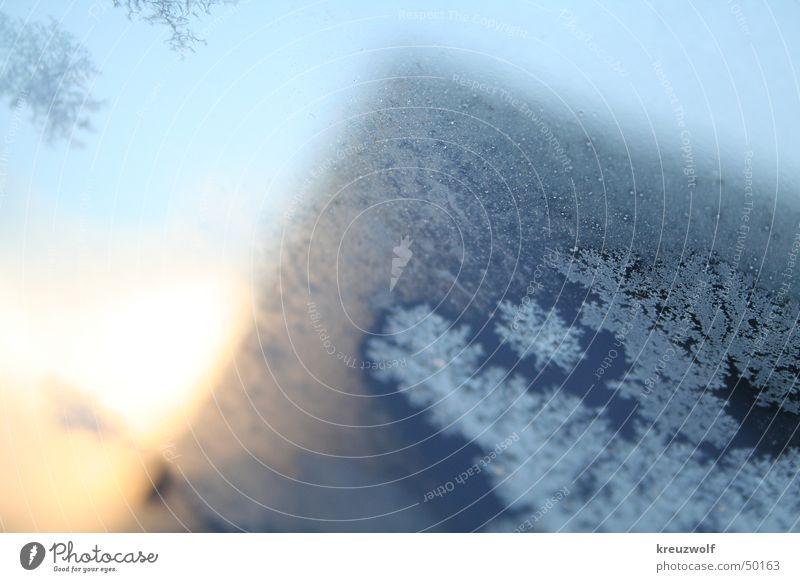 ice flowers Cold Window Sunrise Ice crystal Frostwork Winter Snow crystal Crystal structure Blue Winter morning