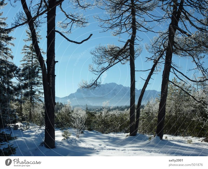 winter Nature Landscape Cloudless sky Winter Beautiful weather Ice Frost Snow Tree Forest Alps Mountain Karwendelgebirge Snowcapped peak Far-off places Calm