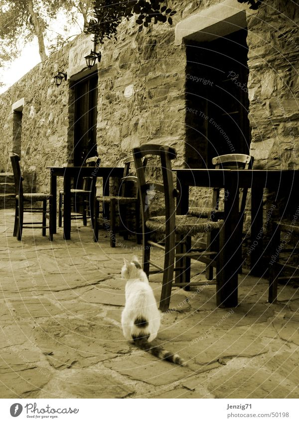 Calm Loneliness Cat Table Closed Chair Gastronomy Greece Sepia Domestic cat Roadhouse Crete Taverna