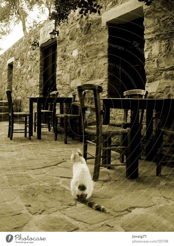 Calm Loneliness Cat Table Closed Chair Gastronomy Greece Sepia Domestic cat Roadhouse Crete Taverna