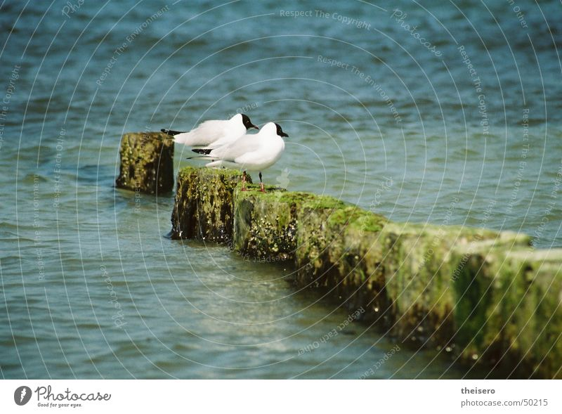 Nature Water Ocean Summer Landscape Bird Sit Baltic Sea Seagull Crouch Break water