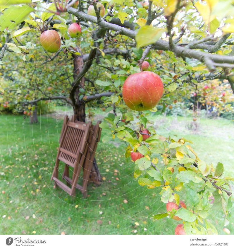 Nature Green Summer Tree Red Relaxation Calm Environment Meadow Autumn Natural Garden Food Park Idyll Beautiful weather