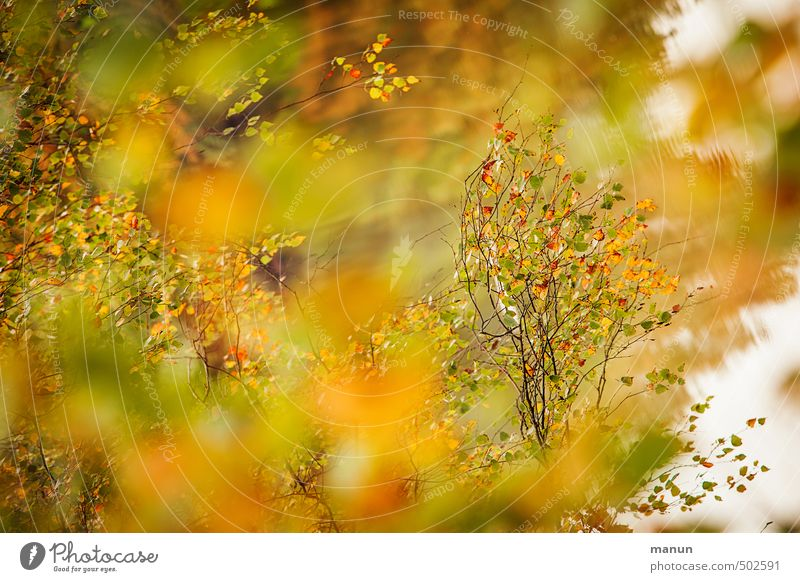 it harvests Nature Autumn Tree Leaf Birch tree Birch leaves Autumnal Autumnal colours Early fall Natural Colour photo Exterior shot Deserted Day Contrast