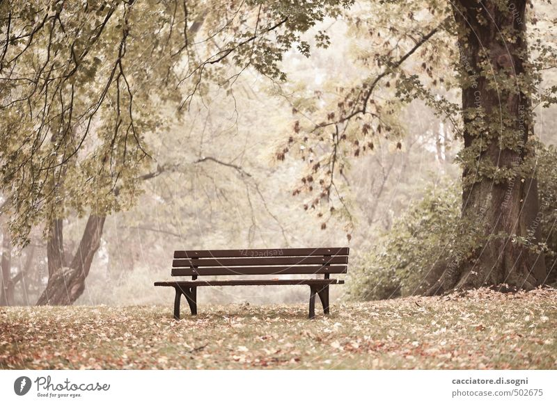 Nature Tree Loneliness Calm Environment Emotions Autumn Grass Exceptional Bright Dream Brown Leisure and hobbies Park Contentment Simple