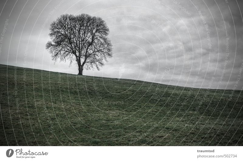 Tree on hill Environment Nature Landscape Animal Clouds Autumn Winter Bad weather Field Hill Deserted Cold Gloomy Secrecy Sadness Loneliness Boredom