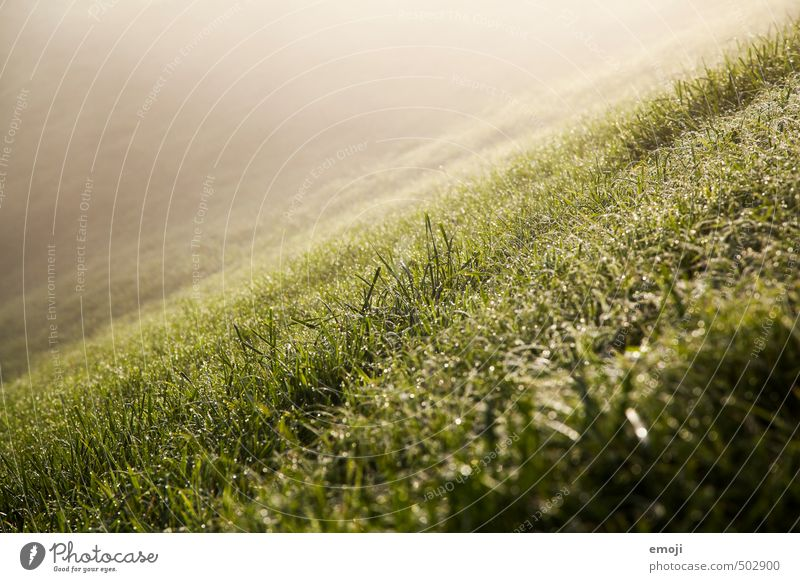 Nature Green Landscape Environment Meadow Grass Natural Hill Slope