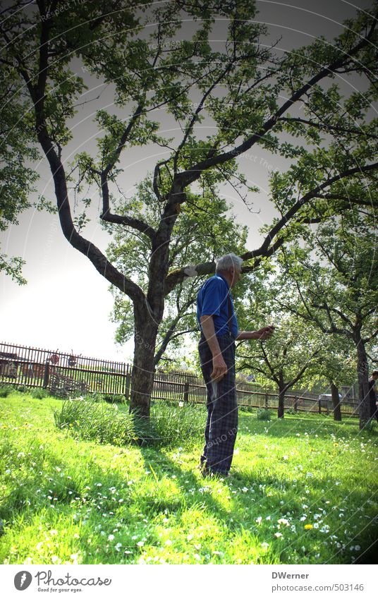 Human being Old Green Plant Tree Calm Senior citizen Grass Healthy Garden Dream Park Masculine Glittering Contentment Stand