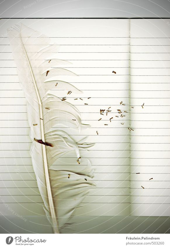 Ocean Beach Coast Lake Bird Feather Paper Wing Write Baltic Sea Seagull Pen Piece of paper Stationery