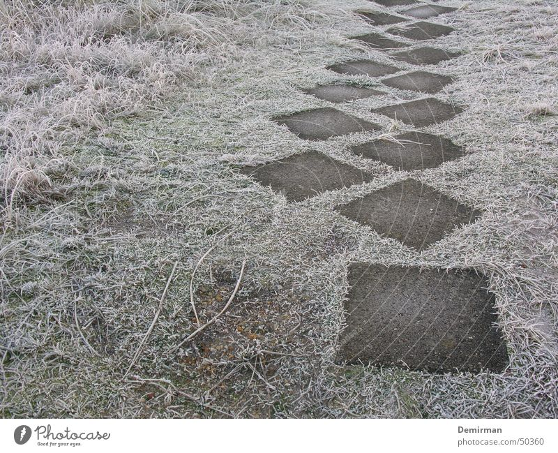 Winter Loneliness Cold Meadow Grass Stone Lanes & trails Going Walking Frost Sidewalk Anonymous Foreign Puzzle Ambiguous Paving tiles