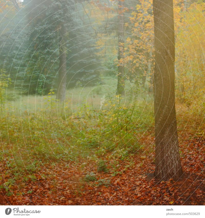 autumn Environment Nature Plant Autumn Bad weather Fog Tree Grass Meadow Forest Faded Brown Green Sadness Transience Leaf Autumn leaves Autumnal Colour