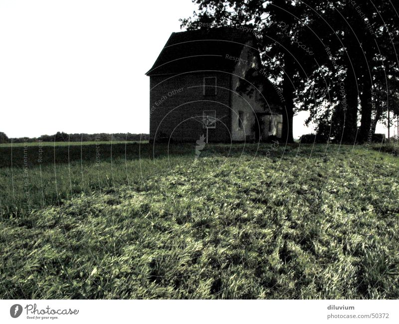 Tree House (Residential Structure) Loneliness Dark Meadow