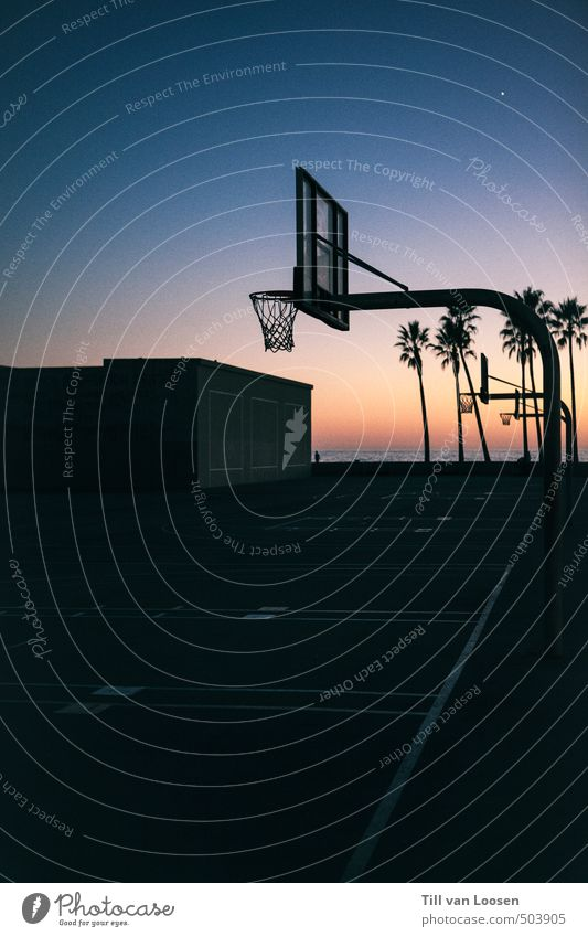 venice beach Sports Basketball arena Landscape Cloudless sky Sunrise Sunset Plant Palm tree Cool (slang) Hip & trendy Warmth Horizon Tourism Sky