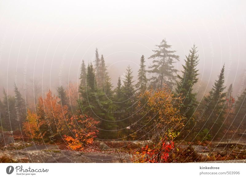 Foggy autumn morning Nature Vacation & Travel Green Colour Plant Tree Red Landscape Clouds Leaf Black Forest Yellow Environment Mountain Autumn