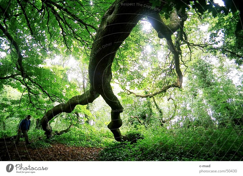 Human being Tree Green Summer Colour Forest Wood Landscape Hiking Northern Ireland Deciduous forest