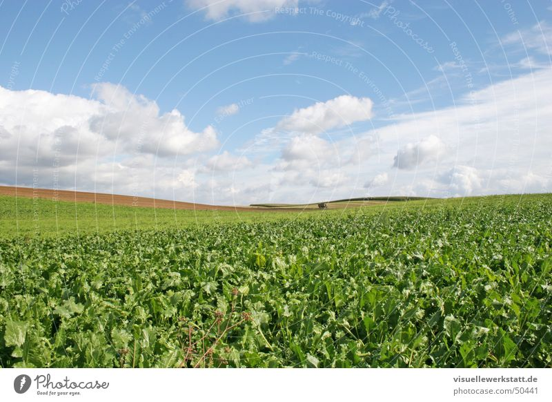 agriculture Agriculture Green Field Rapes Clouds Blue Nature Life Sky