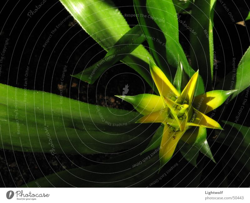 Green Plant Sun Leaf Yellow Blossom Esthetic Star (Symbol) Frankfurt Warehouse Geometry Graceful October Narrow Greenhouse Dark background