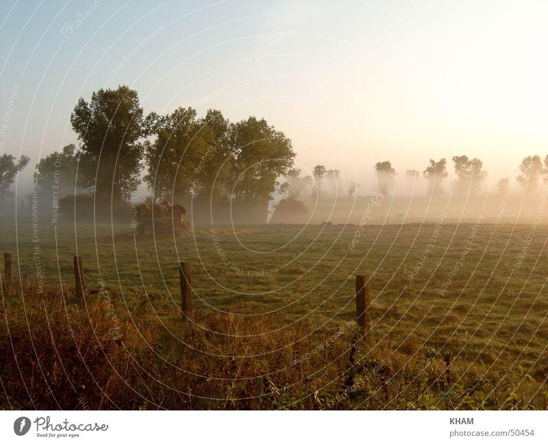 morning fog Fog Meadow Plant Exterior shot Morning Weather Pasture Landscape Sadness