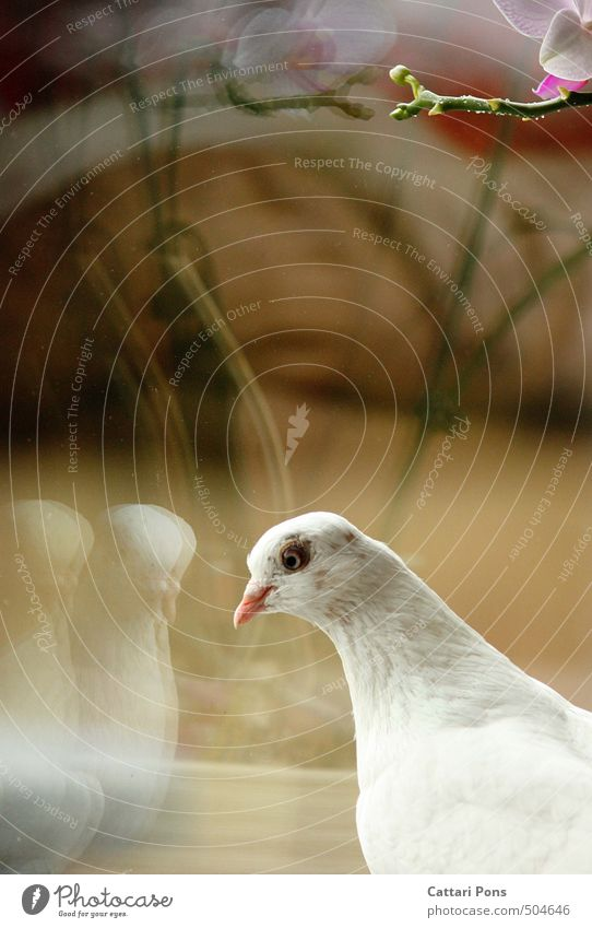 looking-glass world Plant Animal Orchid Leaf Blossom Farm animal Pigeon 1 Observe Esthetic Fantastic Bright Beautiful Uniqueness Crazy White Graceful Reflection