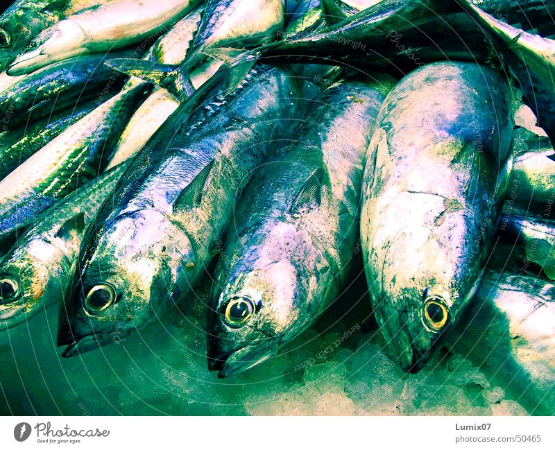 Fresh fish Fish market Green Glittering Mackerel Ocean Set of teeth Nutrition Markets Barn Blue Silver Death freshly caught Fisheye Ice