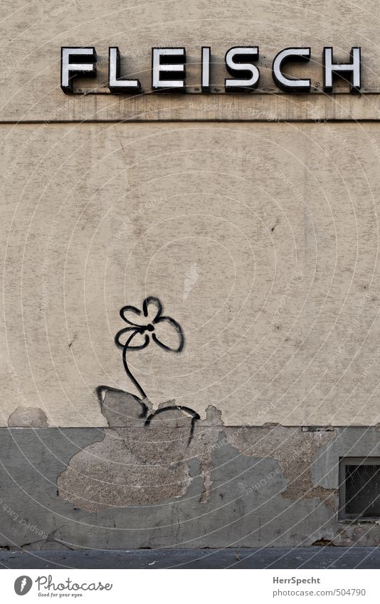 Old City Flower House (Residential Structure) Graffiti Wall (building) Wall (barrier) Building Gray Brown Facade Gloomy Characters Broken Trashy Plaster