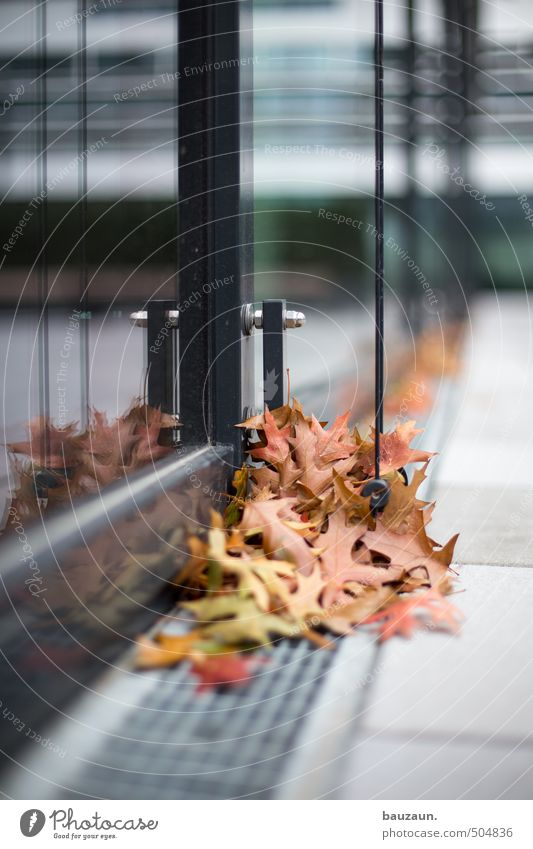 collection point. Gardening Autumn Wind Tree Leaf Park High-rise Bank building Building Architecture Facade Window Gutter Weather protection Lanes & trails