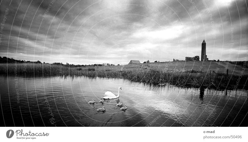 Derwenish Island with swans Northern Ireland Manmade structures Ruin Celts Cemetery Grave Clouds Black White Summer Animal Swan River Tower Construction site