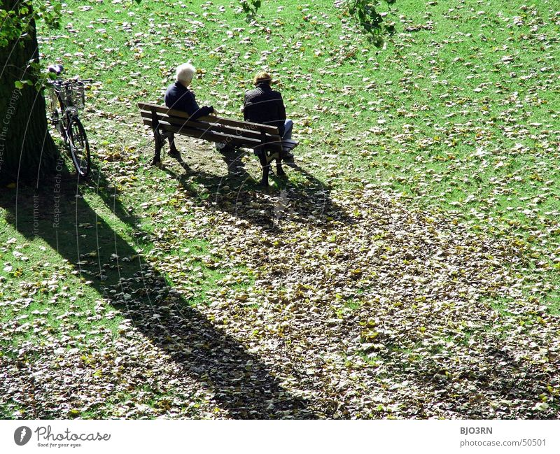 Human being Vacation & Travel Man Old Green Tree Relaxation Leaf Cold Adults Autumn Senior citizen To talk Meadow Grass Couple