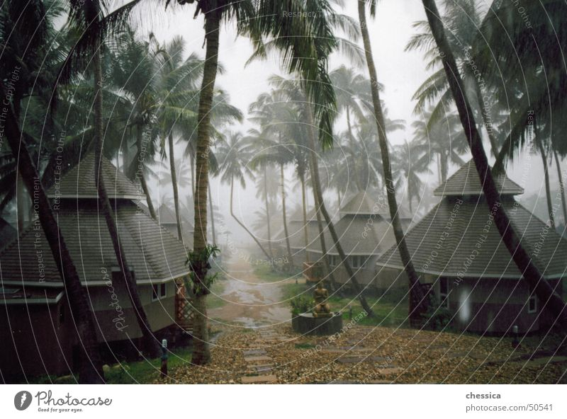 tropical thunderstorm Virgin forest Forest Palm tree Kho Tao Thailand Asia Grief Beautiful Physics Damp Humidity Vacation & Travel Straw hut Ocean Pacific Ocean