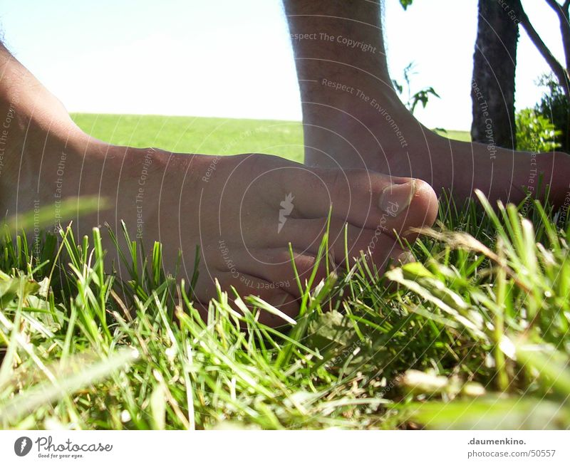 sensual bath Grass Meadow Fence Green Brown Hesitate Barefoot Planning Tree Blade of grass Toes Summer Man Lawn Feet Senses Emotions Inspiration To enjoy