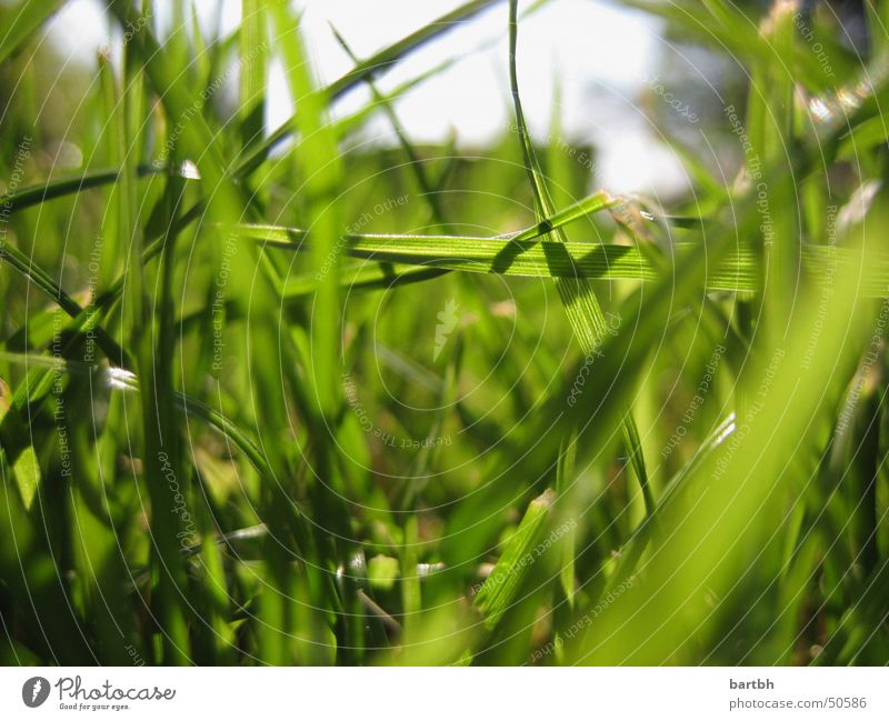 Nature Green Grass