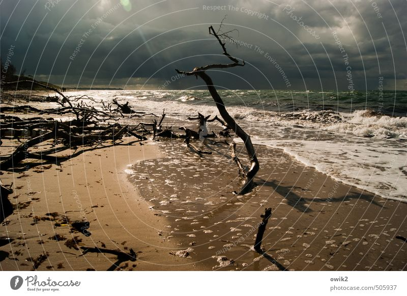 After the storm Environment Nature Landscape Plant Elements Water Sky Storm clouds Horizon Climate Beautiful weather Wind Waves Coast Baltic Sea Western Beach