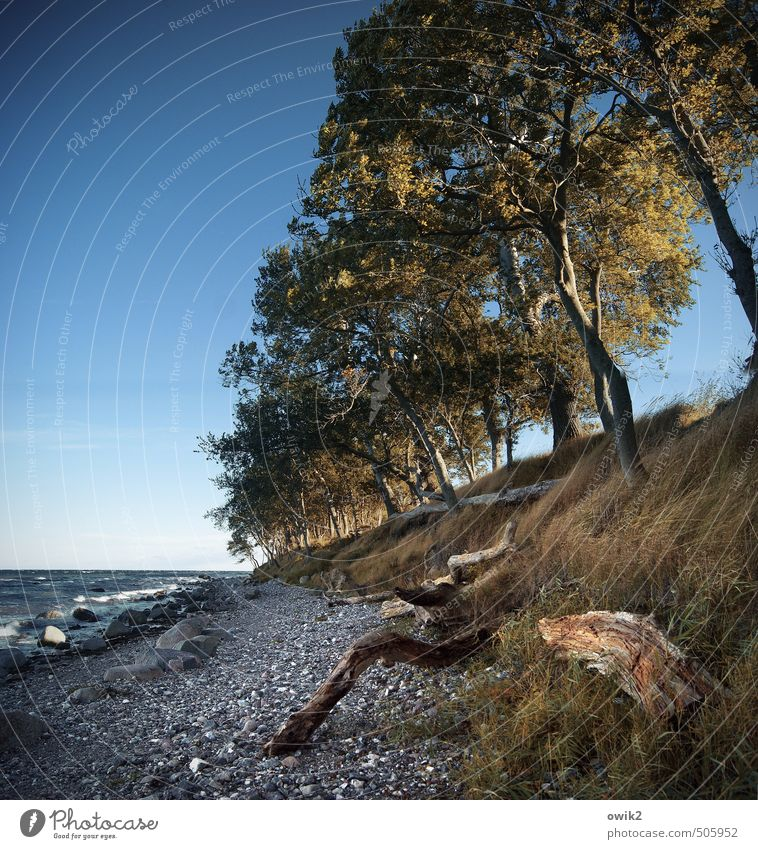 Nature Plant Water Tree Landscape Beach Environment Grass Coast Wood Stone Horizon Wild Weather Growth Illuminate