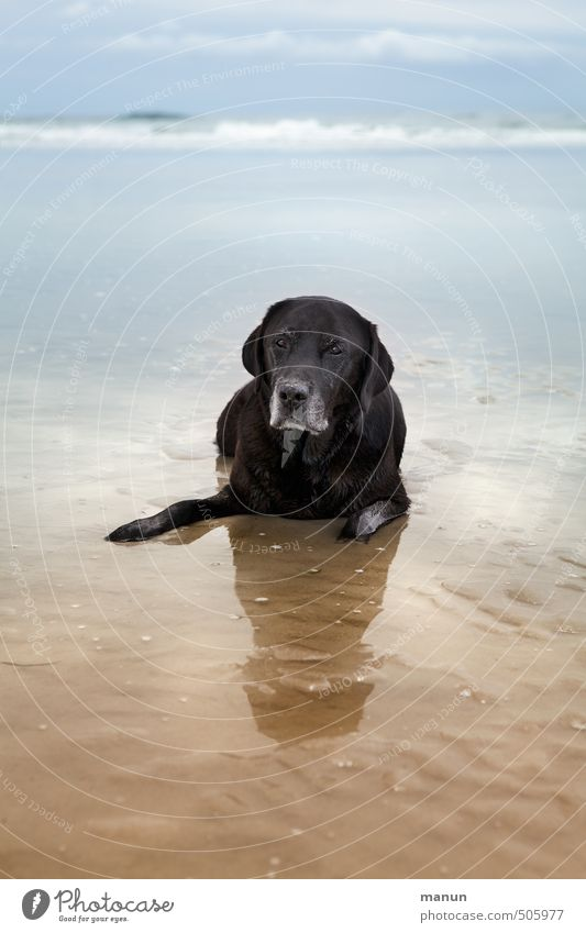Have a Break Vacation & Travel Beach Ocean Nature Landscape Sand Water Coast North Sea Pet Dog Labrador 1 Animal Relaxation Lie Looking Wait Old Natural