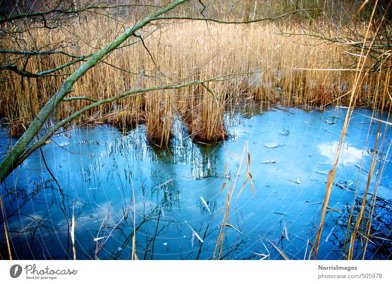 Nature Blue Water Plant Loneliness Landscape Calm Forest Cold Environment Emotions Autumn Grass Dream Brown Ice