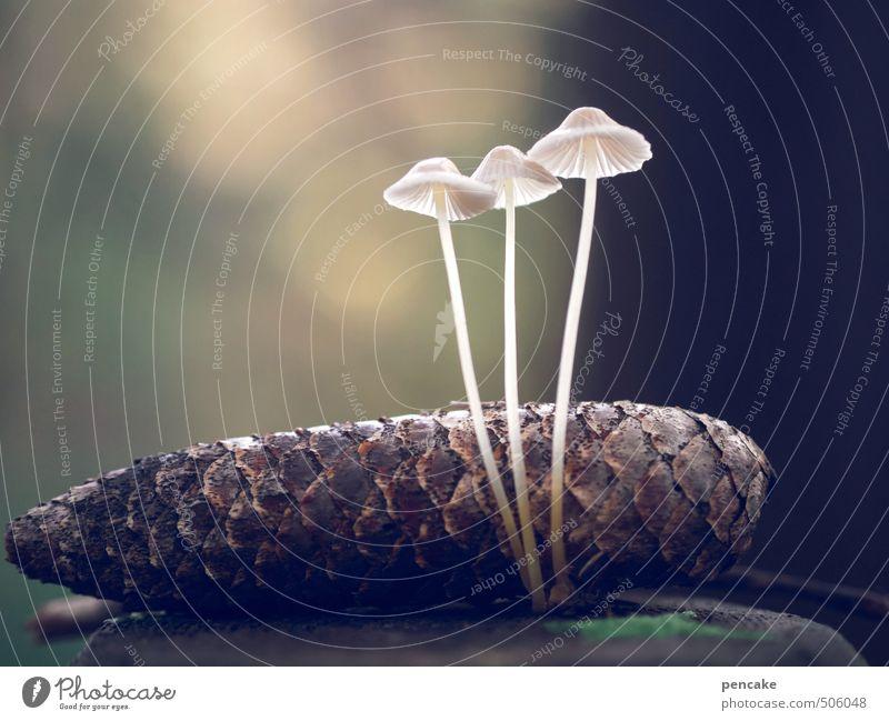 shining lights Nature Elements Autumn Forest Sign Esthetic Exceptional Elegant Beautiful Uniqueness Brown White Mushroom Cone Bright Illuminating Delicate