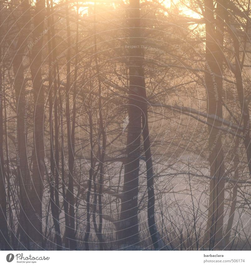 morning light Landscape Earth Sunlight Winter Ice Frost Snow Tree Bushes Forest Illuminate Esthetic Moody Joie de vivre (Vitality) Warm-heartedness Calm