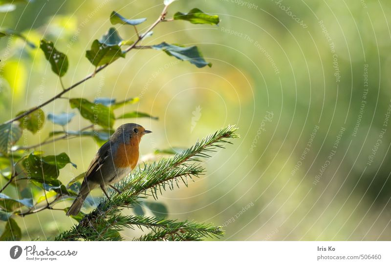 Nature Beautiful Green Summer Calm Animal Forest Warmth Natural Happy Small Freedom Moody Bird Orange Contentment