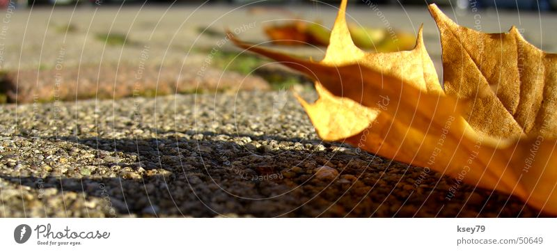 Sun Leaf Asphalt