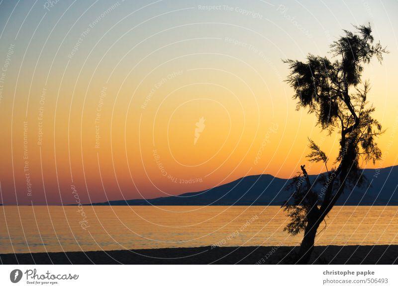 Vacation & Travel Summer Tree Ocean Beach Coast Island Romance Kitsch Cloudless sky Summer vacation